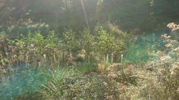 Im angrenzenden Areal erfolgt im Zeitraum Februar/ März 2022 eine weitere Baumpflanzung